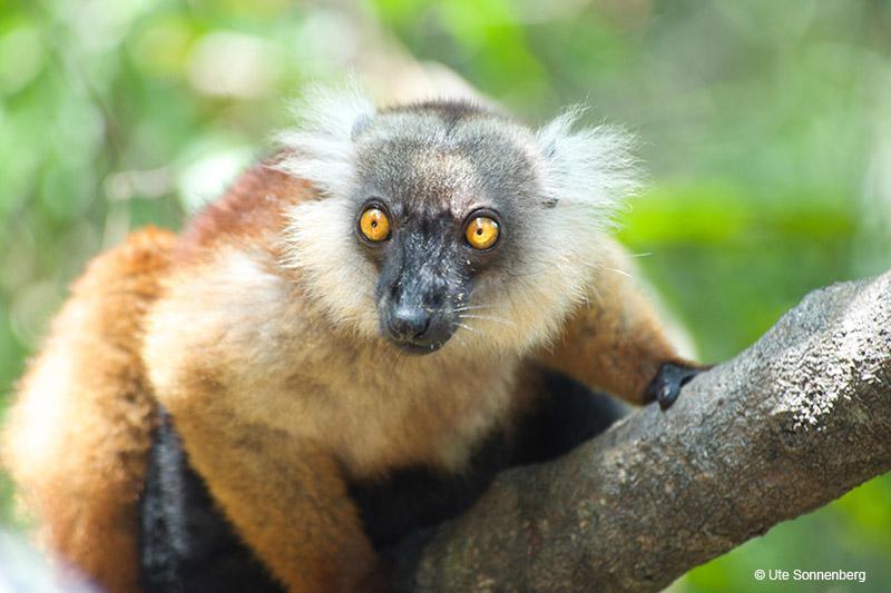 African Safari Travel Blog - 8 cool facts about madagascar