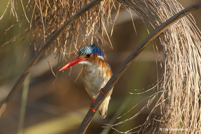 african-safari-destinations-for-bird-lovers