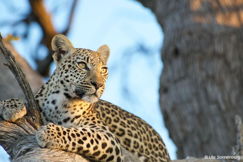 big-cat-safaris-south-africa