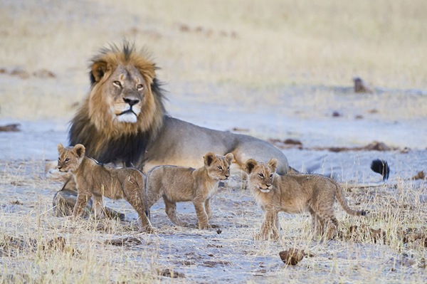 what-you-shold-know-about-hwange-national-park