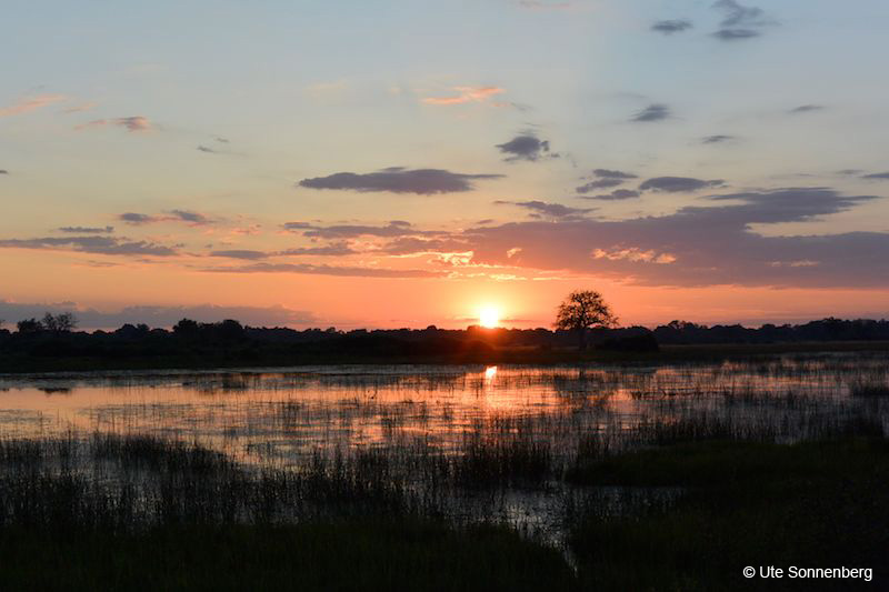 what-you-should-see-and-do-on-safari-in-the-okavango-delta