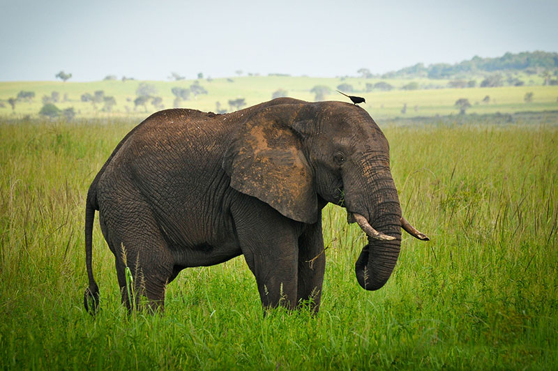 visit the best of uganda with safari tour