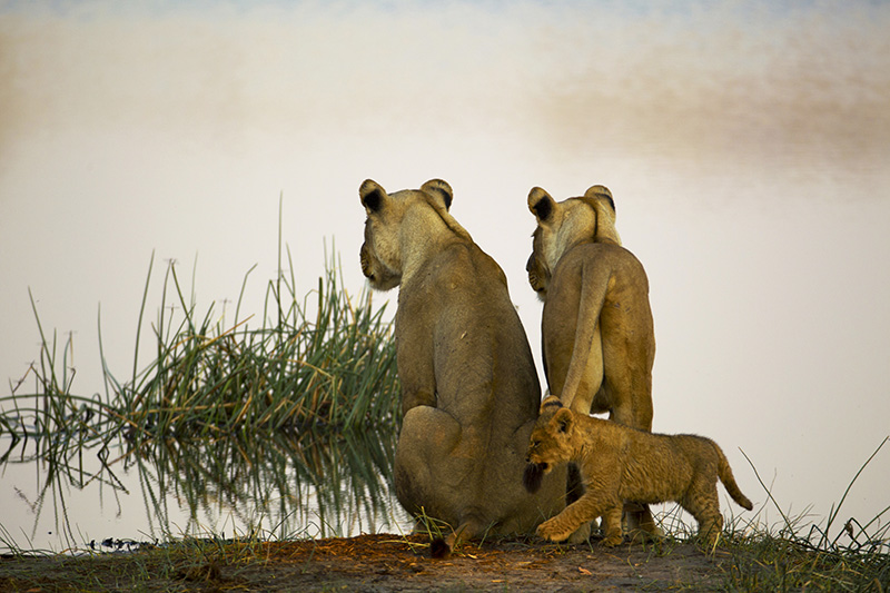 best safari camps in botswana
