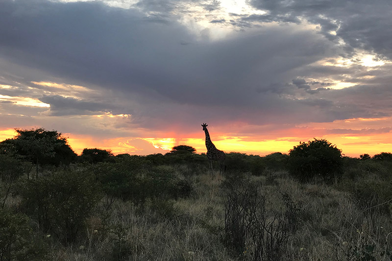central kalahari safari tour in botswana