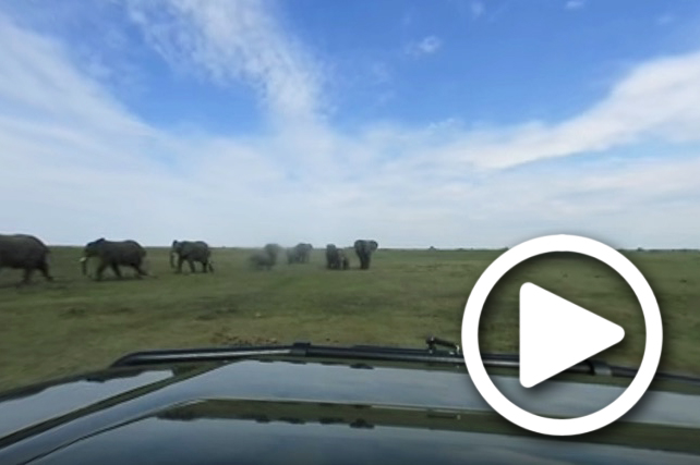 elephant sighting in okavango delta