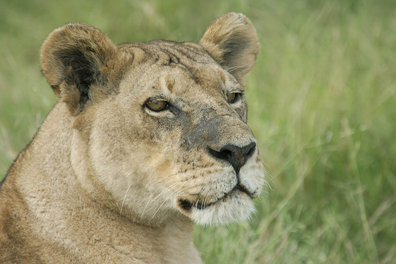 safari tour to hwange and lake kariba