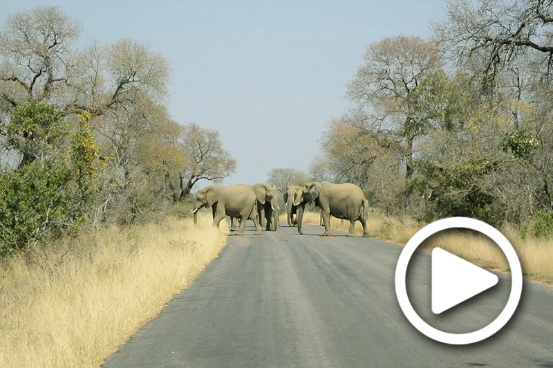 kruger national park safari tour south africa
