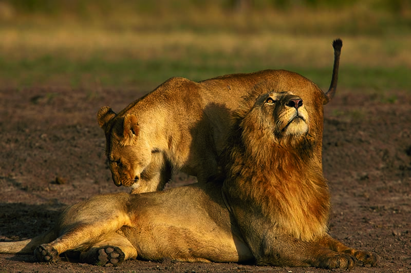 best of africa safrai tour with masai mara and okavango delta