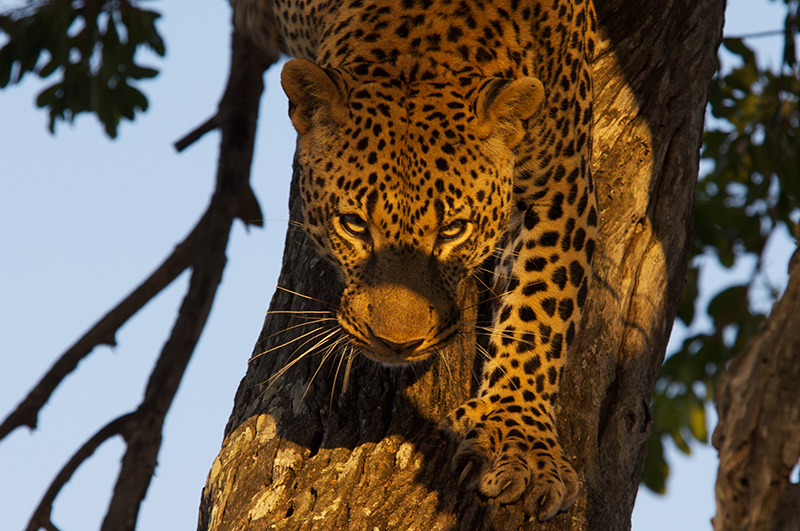 true kruger park safari holiday