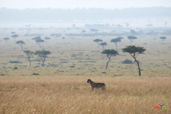Mention your budget for your African safari holiday | Blog | travel