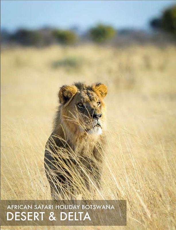 Featured African safari tour 2014: Botswana Desert and Delta