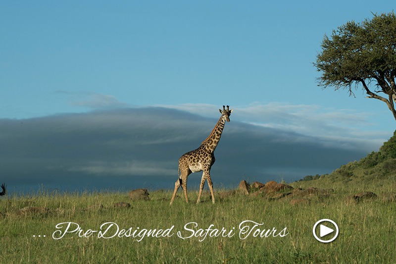 africna safari tours