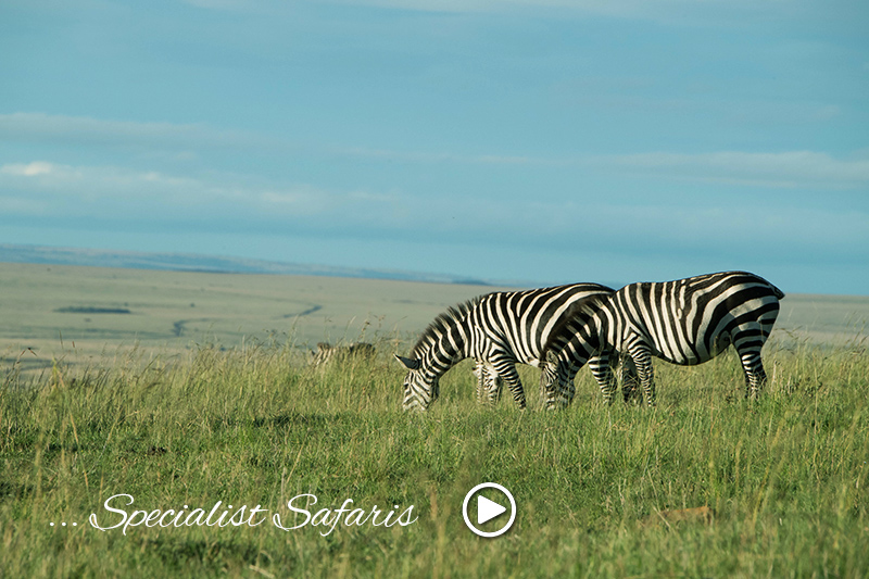 specialist safari tours