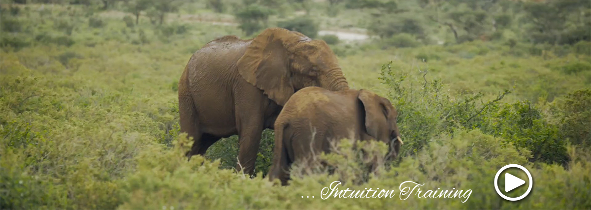 intuition training on african safari